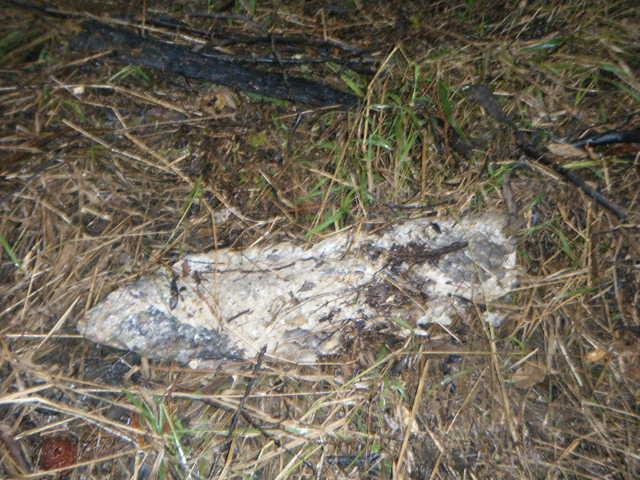 North Pine 26/06/09 Dead lungfish 2